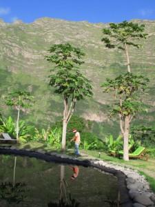 Cap Verde 1